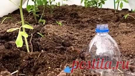 Креативные идеи для огородников