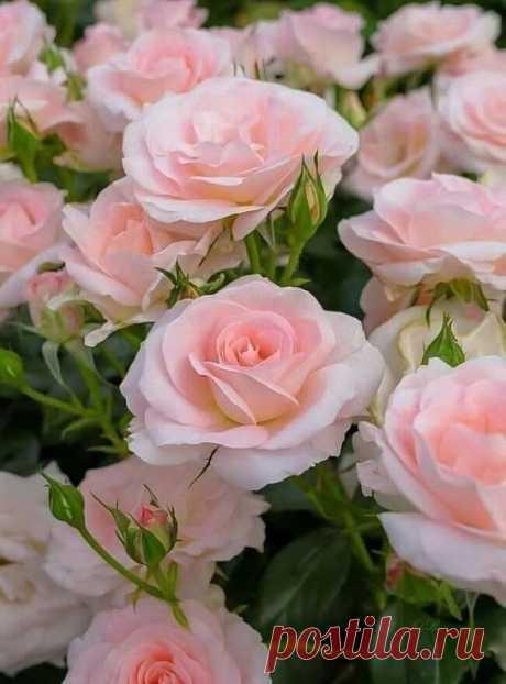 У каждого в Душе свои букеты, И климат у Души там тоже свой. Но главное, чтоб вопреки прогнозам, Душа бы расцветала Добротой!   Доброго, нежного Утра, тепла и гармонии в душе и сердце!