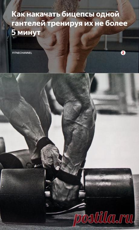 Как накачать бицепсы одной гантелей тренируя их не более 5 минут | fitnechannel | Яндекс Дзен