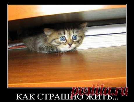 Придет серенький волчок... - Как победить детские страхи | ПолонСил.ру - социальная сеть здоровья