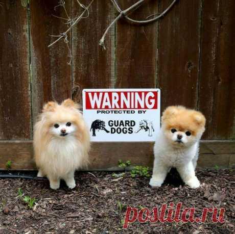 «Осторожно, злая собака»: 20 милых песиков «за забором» ( 21 фото ) . Тут забавно !!!