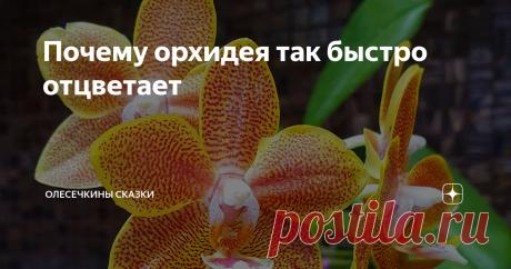 Почему орхидея так быстро отцветает Иногда орхидея начинает сбрасывать цветы, едва распустив бутоны. Почему?