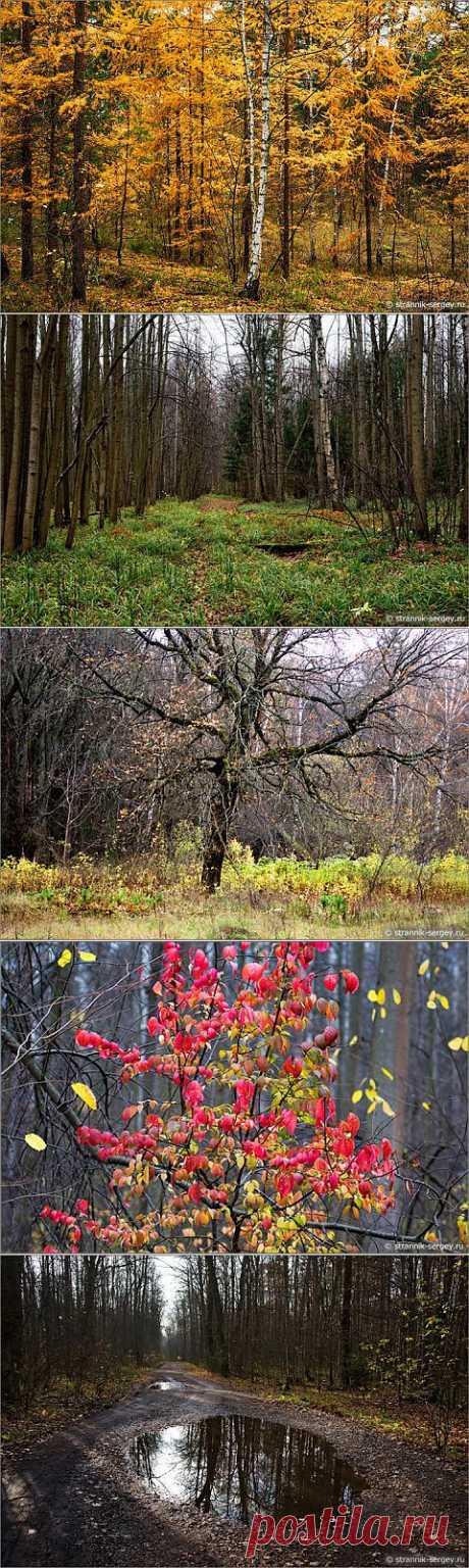 (+1) тема - Прогулка по осеннему лесу | ЛЮБИМЫЕ ФОТО