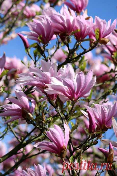 (4) Flowers