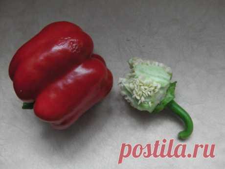 Мой способ сбора семян у перцев — получаются как свежие, быстрее прорастают и сохраняют всхожесть несколько лет