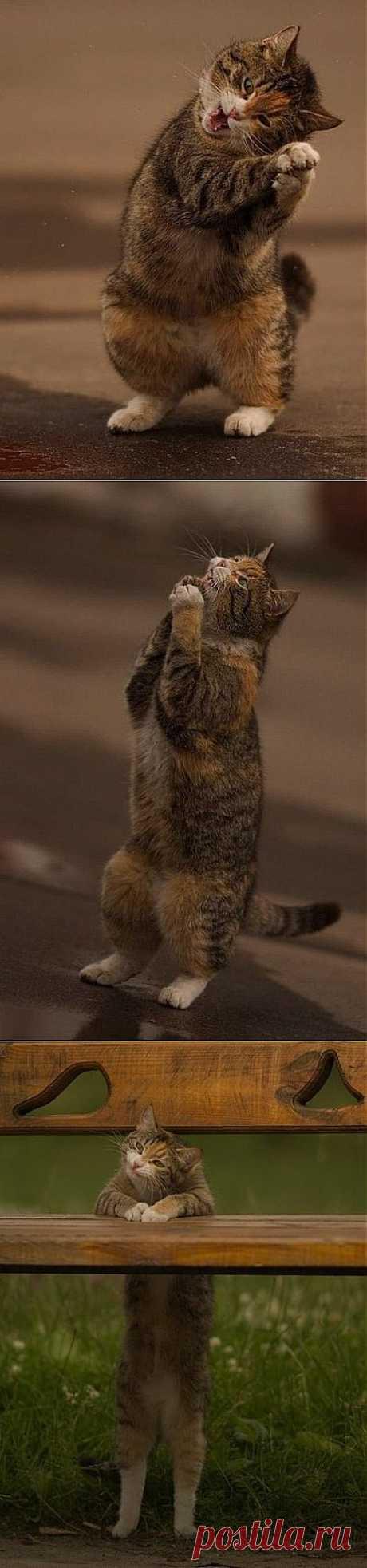 Очень радостный кот. Этот кот был замечен в марте, когда только-только солнышко пробилось наконец сквозь неприветливые тучи. Фотограф просто не мог пройти мимо этого затейника, который то вставал на задние лапы, то подпрыгивал, то играл сам с собой. Видимо, кот (или это была кошка?) очень уж радовался солнцу и теплой погоде.