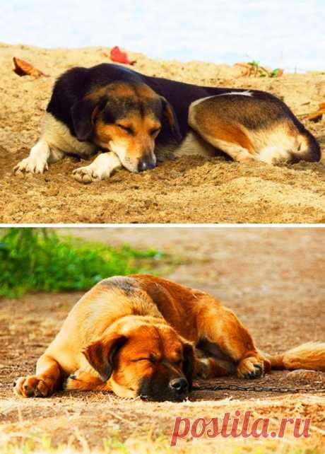 6 поз для сна, которые помогут лучше понять вашу собаку Большинство владельцев собак знает о привычках своих питомцев и легко понимает, когда пес счастлив, встревожен, удивлен или боится. Но что значит его поза для сна? Как и у людей, у собак есть свои пре...