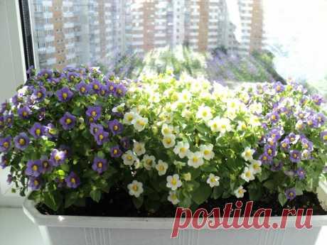 Тысячи цветков с весны до осени | ЗЕЛЕНЫЙ МИР С ЕЛЕНОЙ | Яндекс Дзен