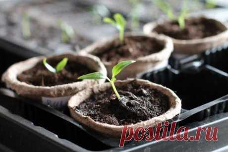 Какой должна быть температура для выращивания рассады | Рассада (Огород.ru)