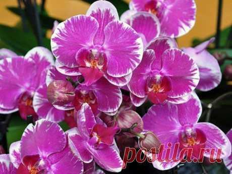 Всё, что нужно знать о цветении орхидей