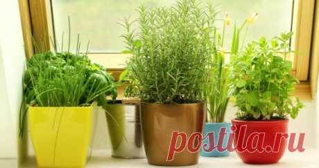 5 пряных трав, которые можно выращивать дома Выращивать зелень дома – это не только модно, но и практично!