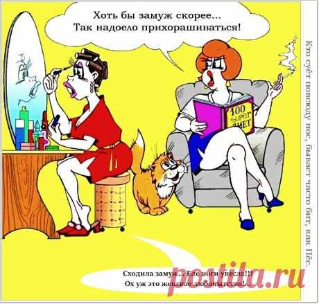 «Смешные карикатуры» — карточка пользователя nikialin в Яндекс.Коллекциях