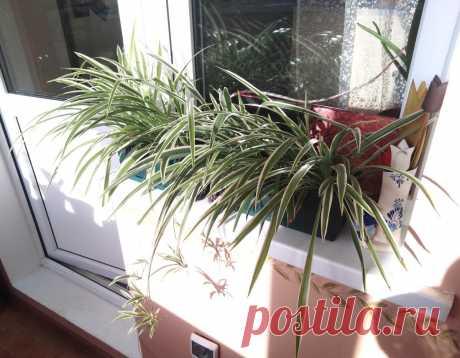 Про растения.