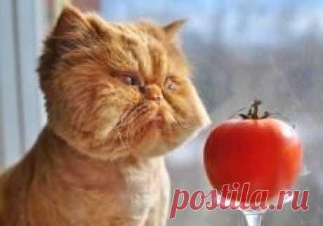 """Сегодня 01 марта отмечается """"День кошек в России"""""""