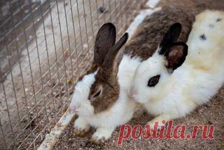 Кто и зачем спасает кроликов вСеребряном бору