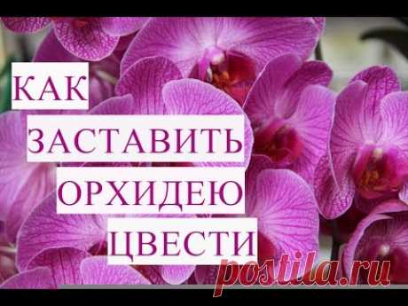 Как Заставить Орхидею Цвести. - YouTube