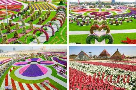 В ОАЭ всей семьей можно отправиться в самый большой в мире парк цветов Dubai Miracle Garden. Стоимость билетов в парк: для взрослых и детей от 3 лет – 20 дирхамов (170 руб.), детям до 3 лет – бесплатно.