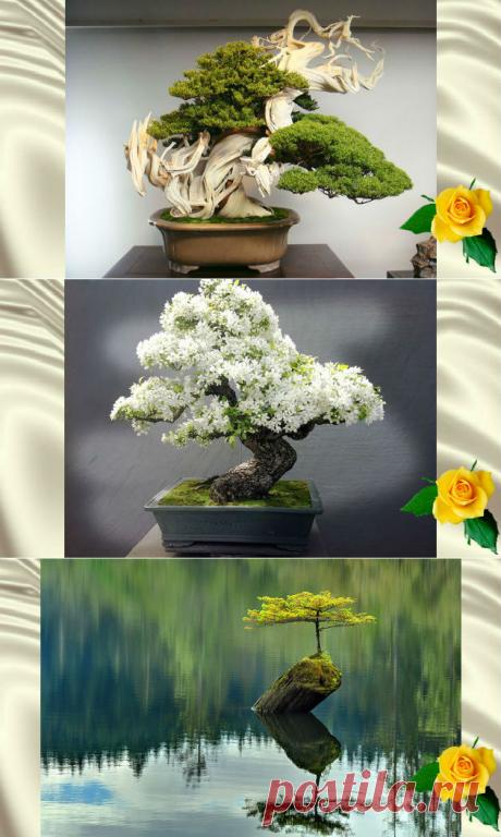 Деревья бонсай невероятной красоты — 30+ фото — Калейдоскоп чудес