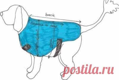 Выкройки одежды для собак — DIYIdeas