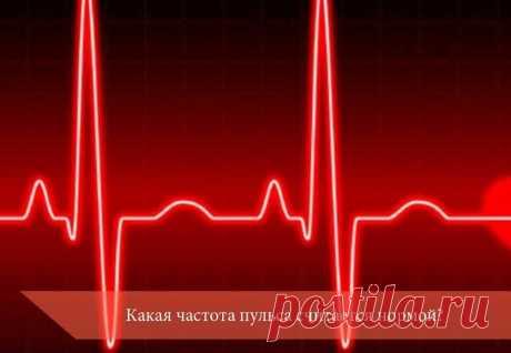 Какая частота пульса считается нормой? | Здоровье вашего организма | Яндекс Дзен