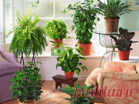 Простой секрет роскошного комнатного цветника