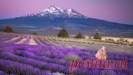 Лаванда, Природа, горы, цветы, пейзаж, поле обои, фото, картинки.