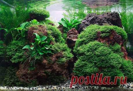 Лава в аквариуме: чем же она хороша? | AQUA-GALACTICA | Яндекс Дзен