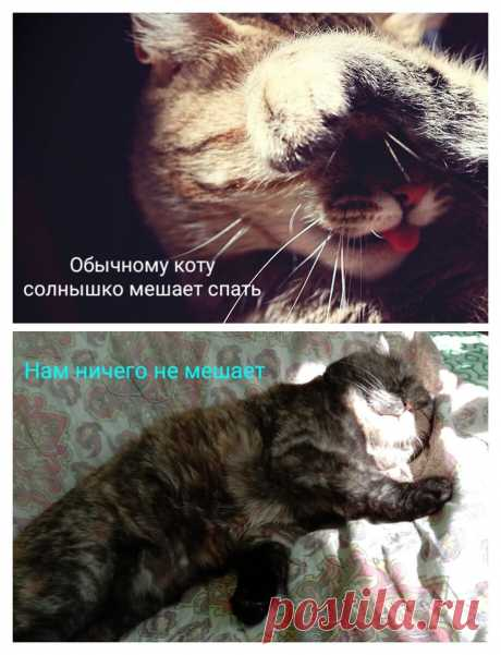 Кошка спит лицом в пол, закрыв лицо лапкой или уткнувшись головой в стену. Забавно или это о чем-то говорит? | Кошка.ru | Яндекс Дзен