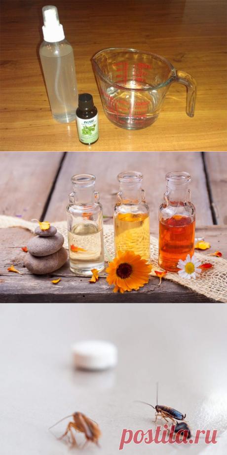 ❶ ТОП-14 эфирных масел от тараканов в квартире: какие аромамасла отпугивают (эвкалипт, масло чайного дерева, лаванды), какие убивают насекомых