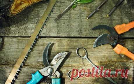 Дачнику на заметку. 20 секретов обрезки плодовых   Блоги о даче и огороде, рецептах, красоте и правильном питании, рыбалке, ремонте и интерьере