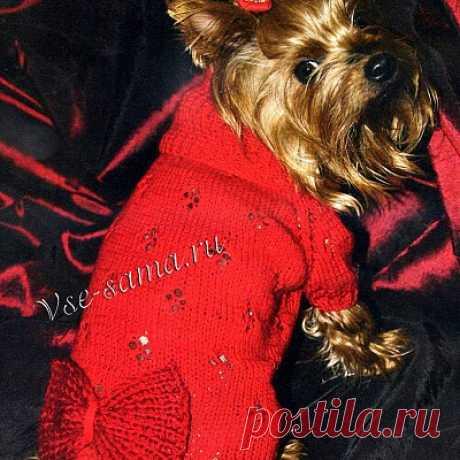 Ажурное платье спицами для собаки с бантом