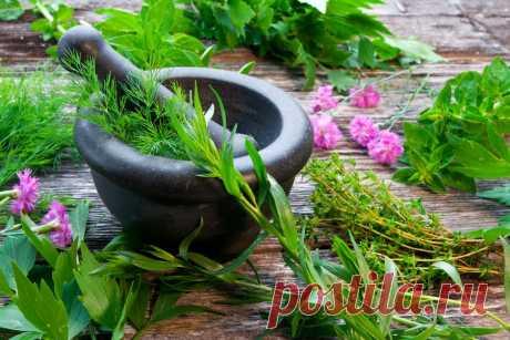 Пряности в огороде: 10 рекомендуемых приправ | prosad.ru всё про сад и огород