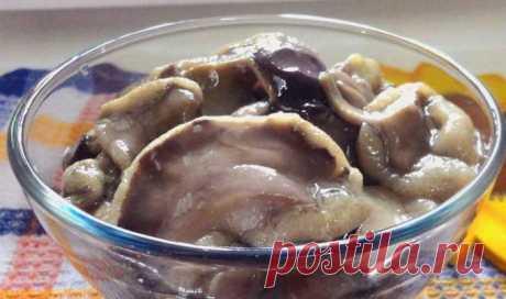 Засолка груздей холодным способом на зиму в банках – 8 рецептов приготовления с фото пошагово