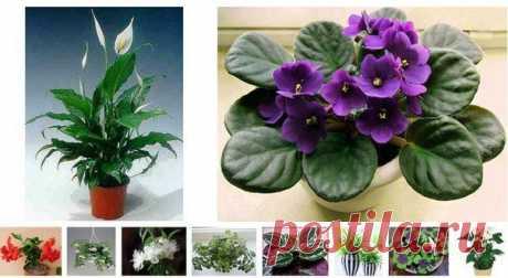 10 комнатных растений семейного счастья