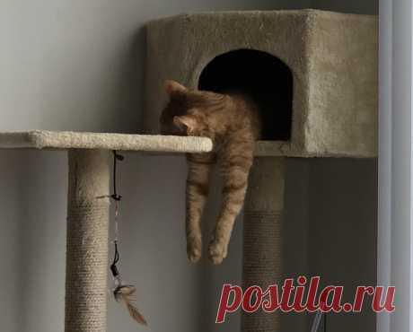 20 примеров, что для кошки важно лишь желание заснуть, а место сгодится любое