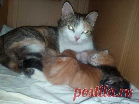 Почему-то в Финляндии любят рыжих котов  и теперь два Ирискиных сынка живут в любящих семьях. А вот Лёва и Китю я оставила себе...