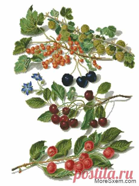 Ветки ягод - Домоводство - медиаплатформа МирТесен