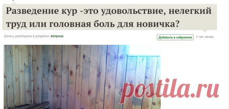 Разведение кур -это удовольствие, нелегкий труд или головная боль для новичка? / 7dach.ru