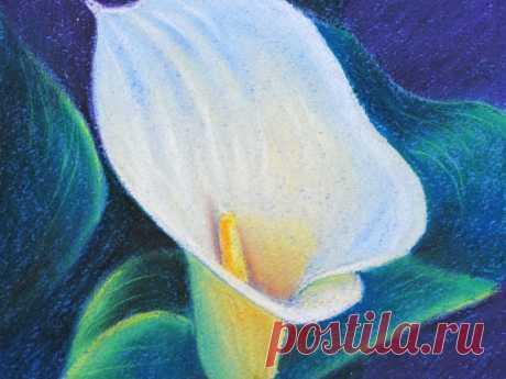 Рисуем пастелью изящный цветок калы — Сделай сам, идеи для творчества - DIY Ideas