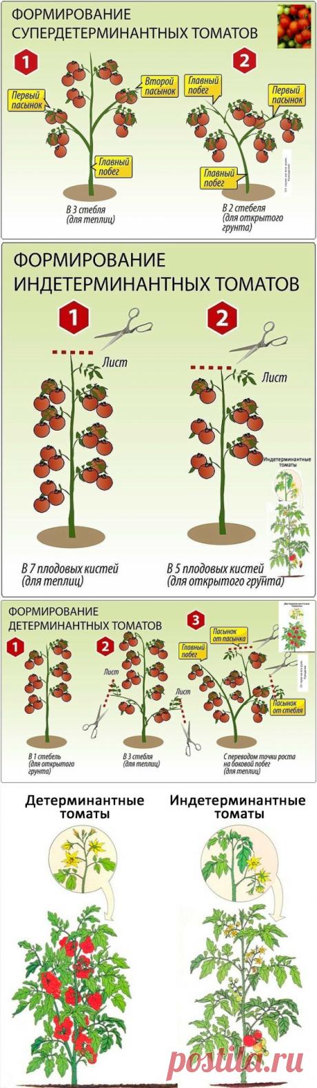 Шпаргалка для начинающих дачников. Как формировать томатные кусты.   От скуки на все руки.   Яндекс Дзен