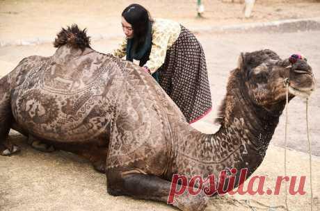 Верблюжий боди-арт / Фото дня / Моя Планета