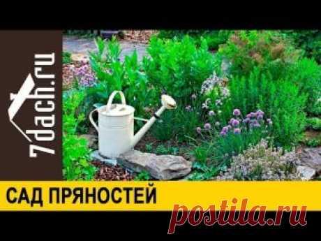 🌿 Сад пряностей: создание, уход, выбор растений - 7 дач