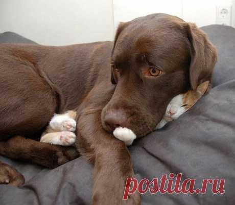 Доказательства того, что кошки могут уснуть где угодно / Питомцы