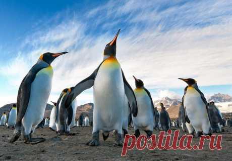 Как тусуются пингвины - милейшие фотографии