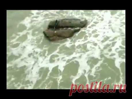 Настоящая русалка попала в объектив камеры - YouTube