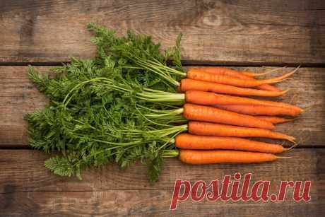 Возможна ли посадка моркови осенью, какие тут особенности