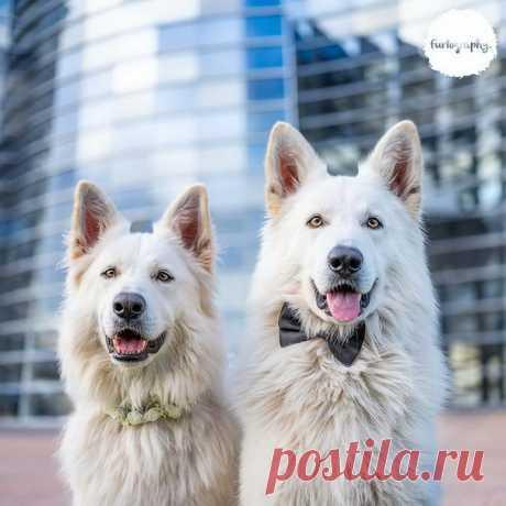 Влюбленные собачки в объективе камеры Крейг Тернер-Баллок из Новой Зеландии 😍 Милашные же? 😏