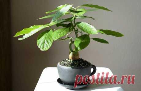 Какие экзотические растения можно вырастить на окне зимой