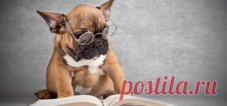 Самые умные породы собак — топ-10 с фото и описанием
