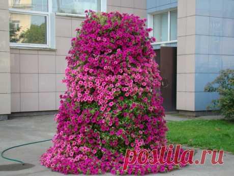 Как красиво разместить петунии в саду? | САД | Яндекс Дзен